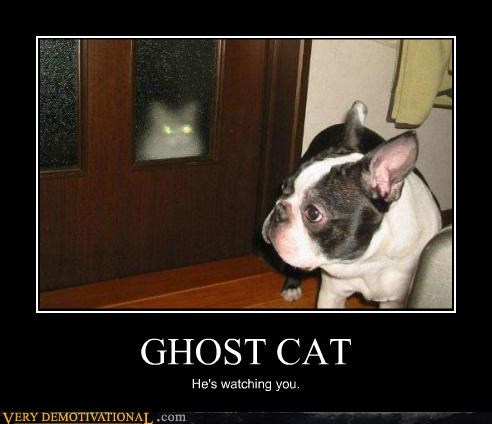 Ghost Cat Cheezburger